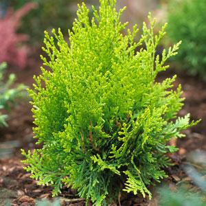 Buy Garden Plants online for the Garden from Gardening Express