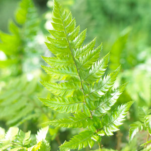Buy Garden Plants Online For The Garden From Gardening