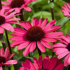 Buy Garden Plants from Online Garden Centre Gardening Express The