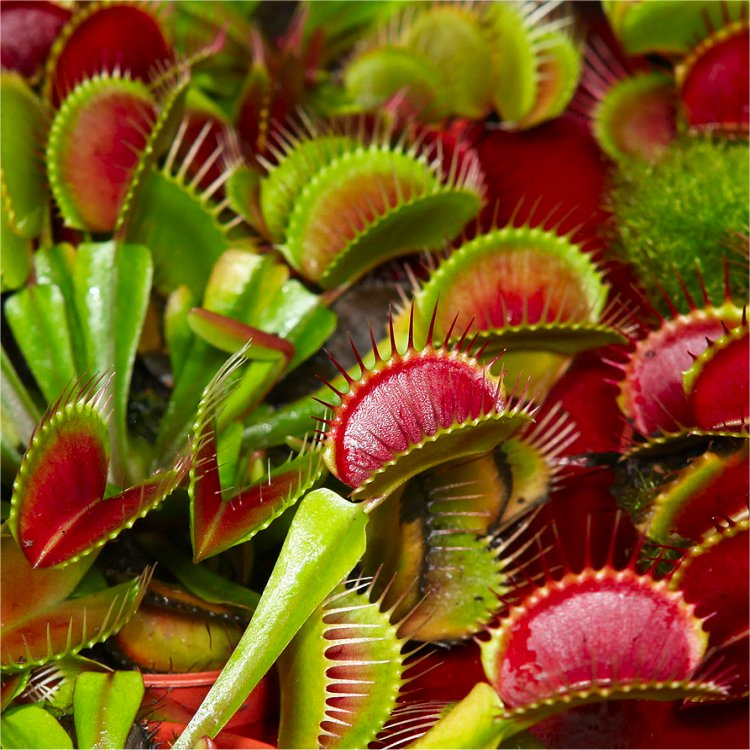 Buy Garden Plants online for the Garden from Gardening ...