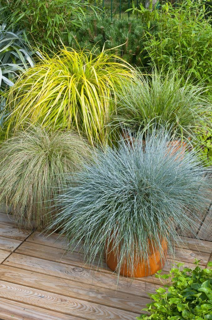 Gorgeous Grass Pack Of 10 Amazing Ornamental Grasses